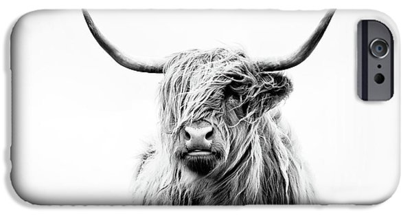 Cow iPhone 6s Case - Portrait Of A Highland Cow by Dorit Fuhg