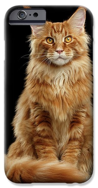 Cat iPhone 6s Case - Portrait Of Ginger Maine Coon Cat Isolated On Black Background by Sergey Taran