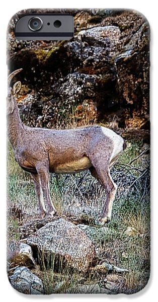 Rocky Mountain Bighorn Sheep iPhone 6s Case - Posing Mountain Sheep by Robert Bales