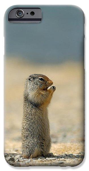 Prairie Dog IPhone 6s Case
