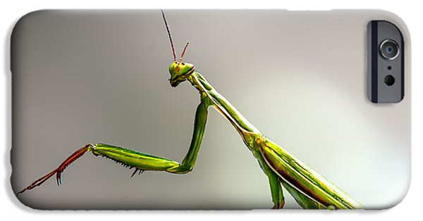 Praying Mantis  IPhone 6s Case by Bob Orsillo