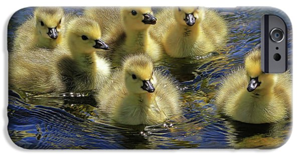 Gosling iPhone 6s Case - Precious Goslings by Donna Kennedy