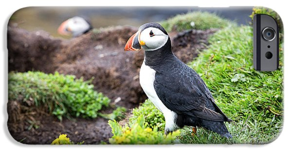 Puffin iPhone 6s Case - Puffin  by Jane Rix