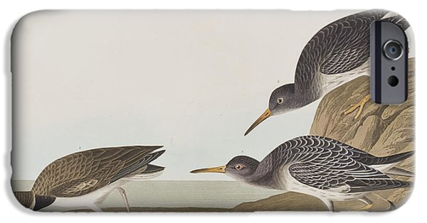 Purple Sandpiper IPhone 6s Case by John James Audubon