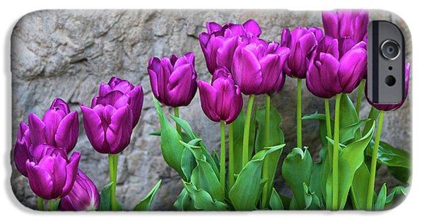 Tulip iPhone 6s Case - Purple Tulips by Tom Mc Nemar