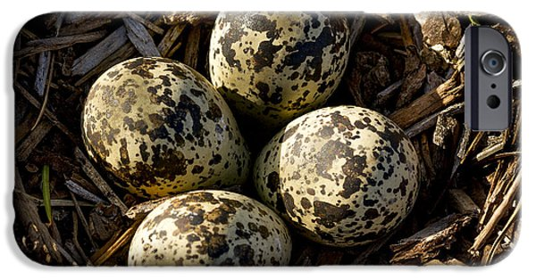 Quartet Of Killdeer Eggs By Jean Noren IPhone 6s Case by Jean Noren