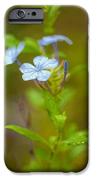 New Leaf iPhone 6s Case - Raindrops On Petals by Az Jackson