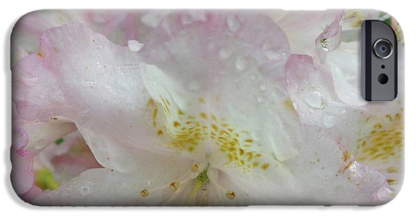 Raindrops On Rhododendron IPhone 6s Case