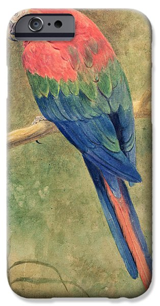 Red And Blue Macaw IPhone 6s Case by Henry Stacey Marks