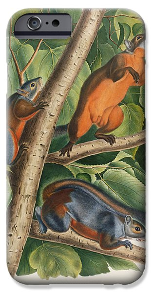Red Bellied Squirrel  IPhone 6s Case by John James Audubon