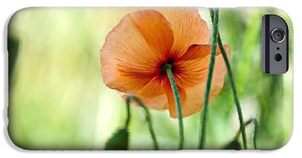 Red Corn Poppy Flowers 02 IPhone Case by Nailia Schwarz