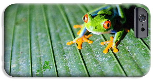 Red Eyed Frog Close Up IPhone 6s Case by Matteo Colombo