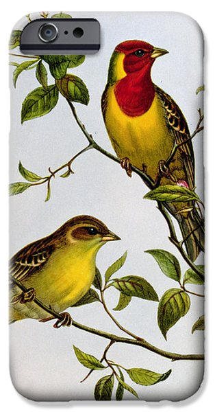 Red Headed Bunting IPhone 6s Case by John Gould