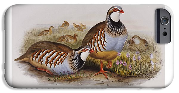 Red-legged Partridges IPhone 6s Case by John Gould