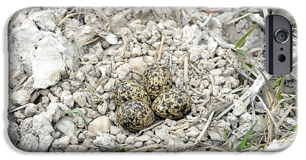 Red-wattled Lapwing Nest IPhone 6s Case by Fletcher & Baylis