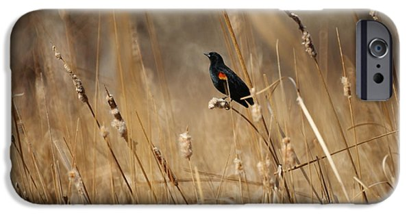 Red Winged Blackbird IPhone 6s Case by Ernie Echols