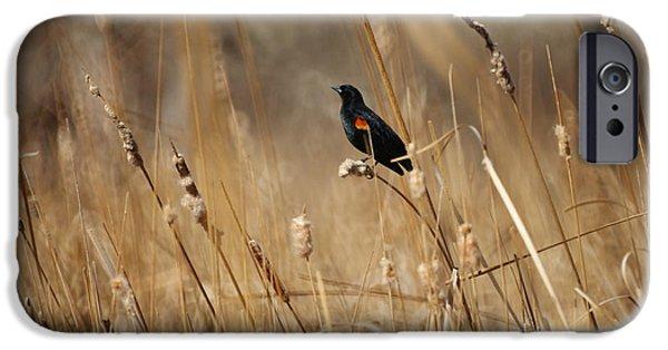 Red Winged Blackbird IPhone 6s Case by Ernie Echols