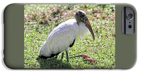 Resting Wood Stork IPhone 6s Case by Carol Groenen
