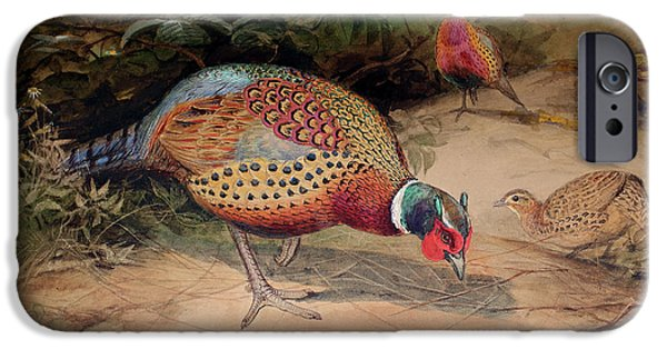 Ring Necked Pheasant IPhone 6s Case by Joseph Wolf
