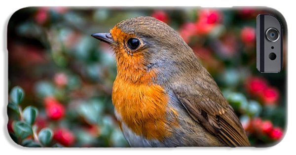 Robin Redbreast IPhone 6s Case by Adrian Evans