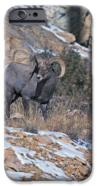Rocky Mountain Bighorn Sheep iPhone 6s Case - Rocky Mountain Big Horn Ram  by Gary Langley