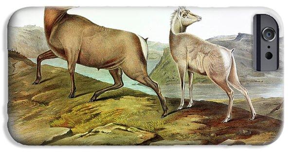 Rocky Mountain Bighorn Sheep iPhone 6s Case - Rocky Mountain Sheep by John James Audubon