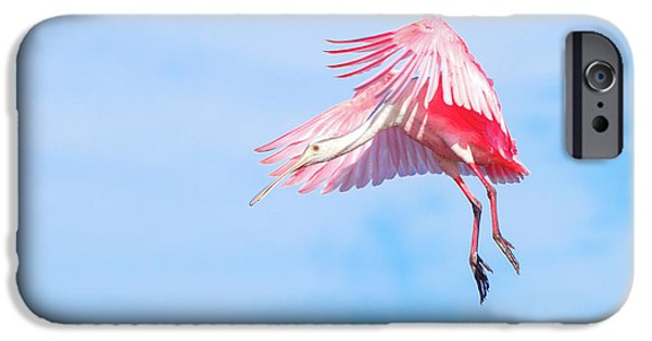 Roseate Spoonbill Final Approach IPhone 6s Case by Mark Andrew Thomas