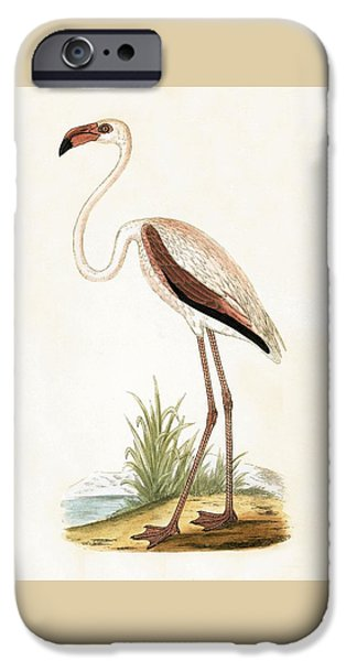 Rosy Flamingo IPhone 6s Case