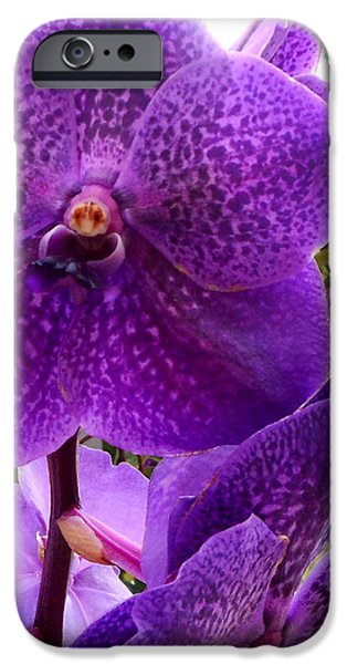 Royal Purple Orchids IPhone 6s Case