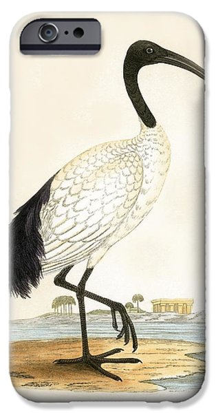 Sacred Ibis IPhone 6s Case by English School