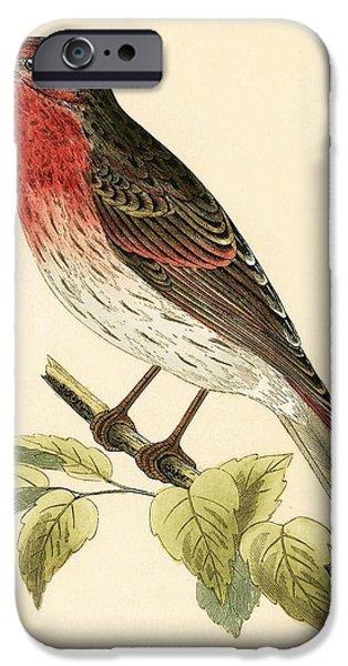Scarlet iPhone 6s Case - Scarlet Bullfinch by English School