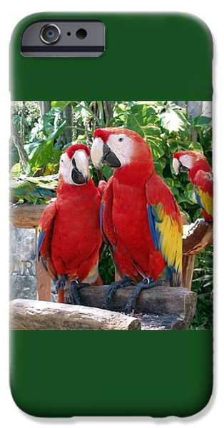 Scarlet Macaws IPhone 6s Case by Ellen Henneke