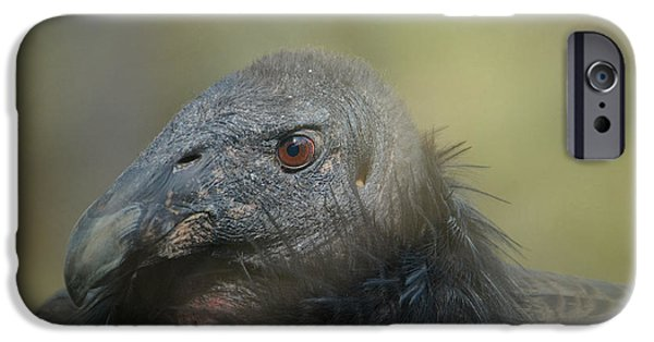 Scavenger IPhone 6s Case by Fraida Gutovich