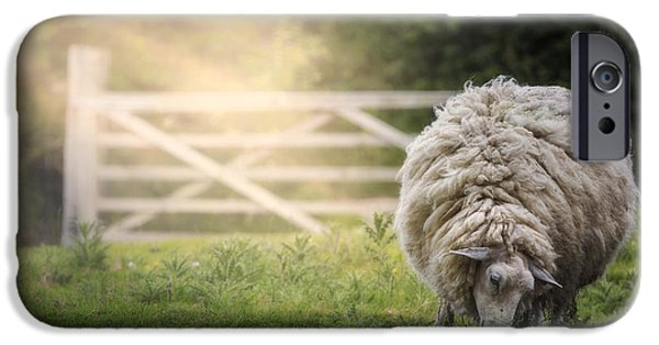 Sheep IPhone 6s Case