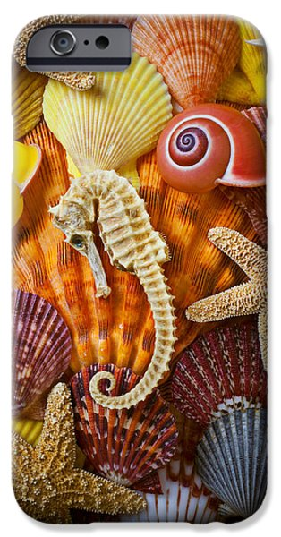 Seahorse And Assorted Sea Shells IPhone 6s Case by Garry Gay