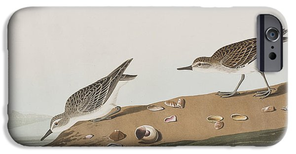 Semipalmated Sandpiper IPhone 6s Case by John James Audubon