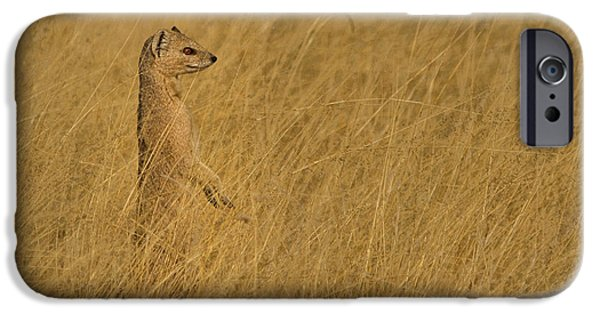 Meerkat iPhone 6s Case - Sentinel by Linda Oliver