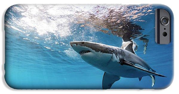 Shark Rays IPhone 6s Case by Shane Linke