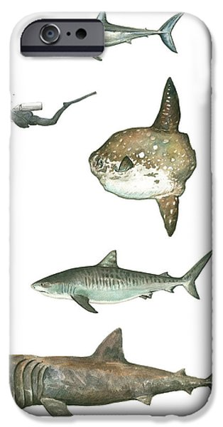 Scuba Diving iPhone 6s Case - Sharks And Mola Mola by Juan Bosco
