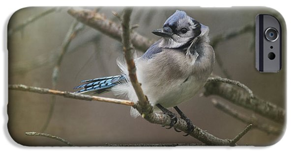 Bluejay iPhone 6s Case - Shelter From The Wind by Susan Capuano