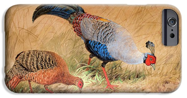 Siamese Pheasant  IPhone 6s Case by Joseph Wolf