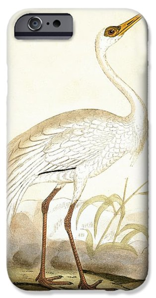 Siberian Crane IPhone 6s Case by English School