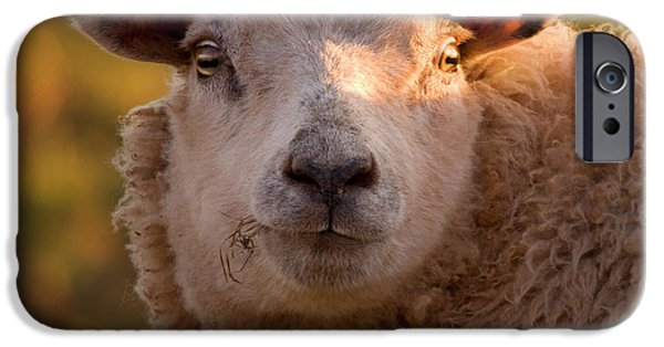 Sheep iPhone 6s Case - Silly Face by Angel Ciesniarska