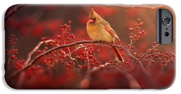 Cardinal iPhone 6s Case - Simple Beauty by Rob Blair