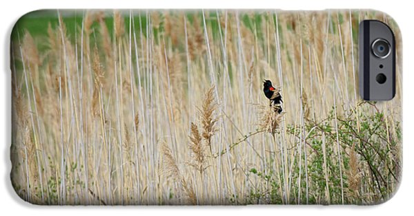 IPhone 6s Case featuring the photograph Sing For Spring by Bill Wakeley