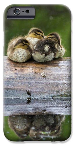 Gosling iPhone 6s Case - Sleepy Mallard Babies by Mircea Costina Photography