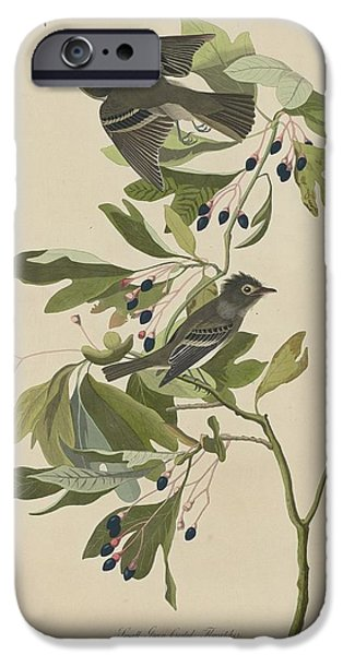 Small Green-crested Flycatcher IPhone 6s Case