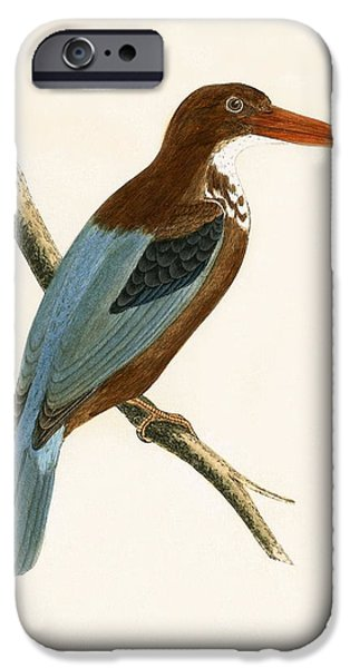 Smyrna Kingfisher IPhone 6s Case by English School