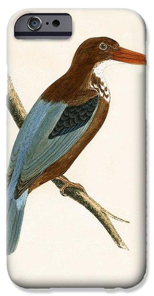 Smyrna Kingfisher IPhone 6s Case