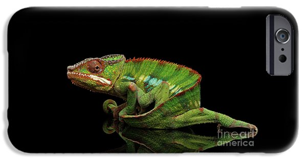 Sneaking Panther Chameleon, Reptile With Colorful Body On Black Mirror, Isolated Background IPhone 6s Case by Sergey Taran